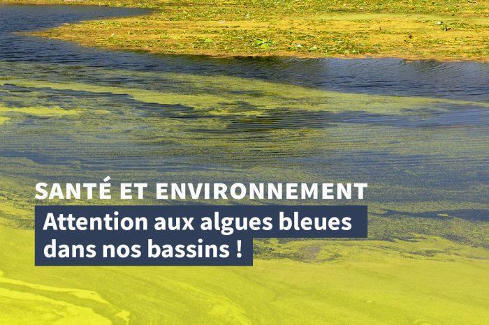 Attention aux algues bleues dans nos bassins